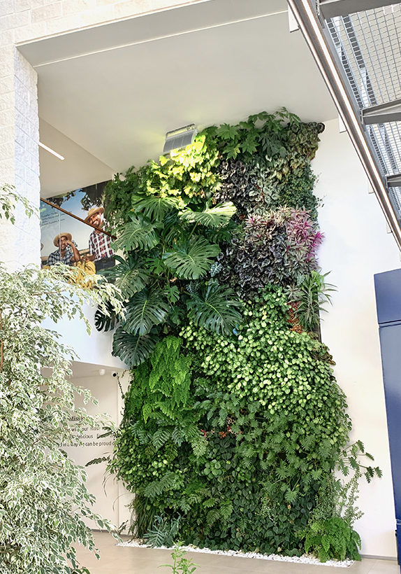 Servicio-muro-verde