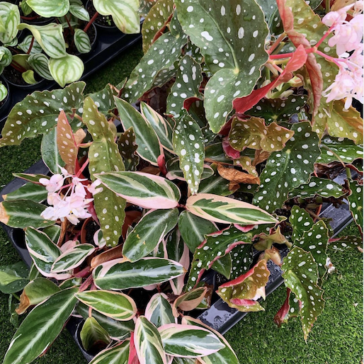 ladelasplantas-instagram_1